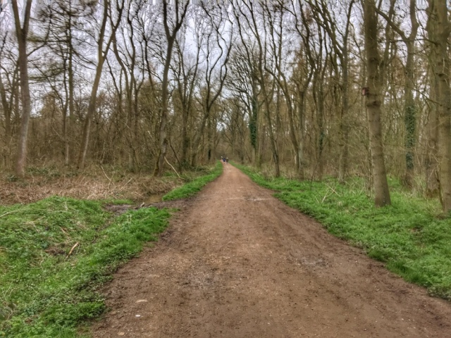 Race Review: Bourne Run in the Woods 10K – Running Abby